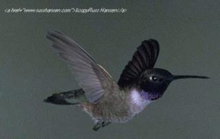 Birding Hot Spots