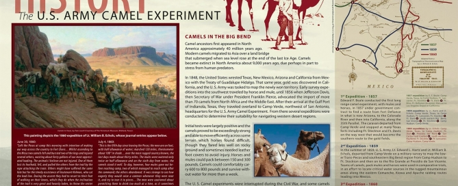 US Army Camel Experiment